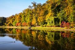 秋天叶子,槭树分支反对湖和天空 日绿色留下公园星期日晴朗 图库摄影