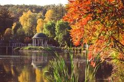 秋天叶子,槭树分支反对湖和天空 日绿色留下公园星期日晴朗 免版税图库摄影