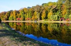 秋天叶子,槭树分支反对湖和天空 日绿色留下公园星期日晴朗 免版税库存图片