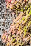 秋天叶子,被包裹墙壁 免版税库存照片