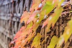 秋天叶子,被包裹墙壁 库存图片