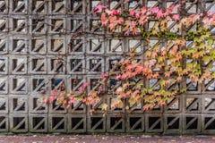 秋天叶子,被包裹墙壁 图库摄影