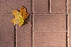 秋天叶子,绿色,黄色和橙色颜色,隔绝在黑暗的铈 库存照片