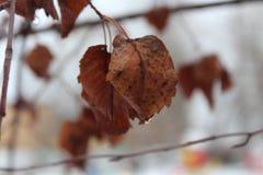 秋天叶子 雨在11月 免版税图库摄影