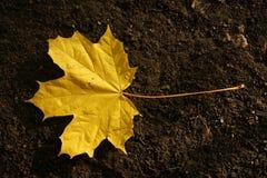 秋天叶子 库存图片