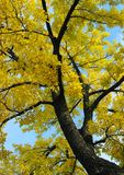 秋天叶子 免版税图库摄影
