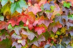 秋天叶子2 库存图片