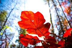 秋天叶子 图库摄影