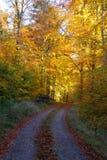 秋天向前在11月 库存图片