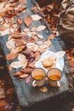 秋天周末在森林里 库存图片