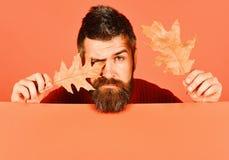 秋天和下落的叶子概念 秋季和行家样式 免版税库存照片