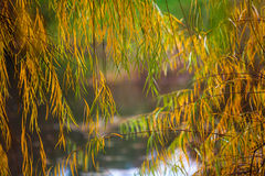 秋天和叶子 库存照片