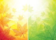 秋天和夏天背景 免版税库存照片