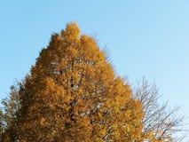 秋天和改变的自然树叶子 免版税库存图片