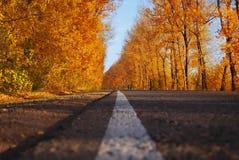 秋天和本质 免版税库存照片