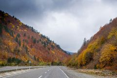 秋天和森林、五颜六色的树和叶子,瀑布 库存照片
