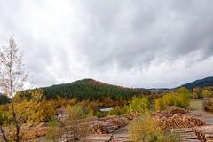 秋天和森林、五颜六色的树和叶子,瀑布 库存图片