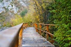 秋天和森林、五颜六色的树和叶子,瀑布 免版税库存照片
