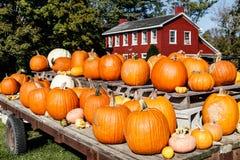 秋天和秋天万圣夜场面用南瓜和金瓜待售和谷仓上色了房子我 库存照片