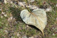 秋天和秋天在加拿大9月或10月水平的封面 免版税库存图片