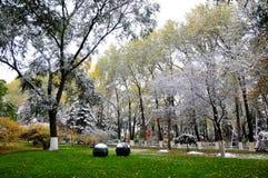 秋天和雪 免版税图库摄影