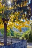 秋天唯一结构树 免版税库存图片