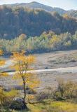 秋天唯一结构树 库存图片