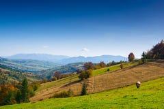 秋天喀尔巴阡山脉的横向山 库存图片