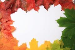 秋天四个季节 库存图片