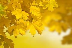 秋天回到叶子光 库存照片