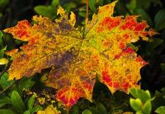 秋天图象叶子范围xxxl 库存照片