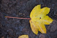 秋天图象叶子范围xxxl 免版税库存图片
