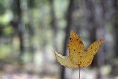 秋天图象叶子范围xxxl 库存图片