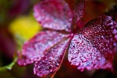 秋天图象叶子范围xxxl 图库摄影
