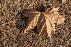 秋天图象叶子范围xxxl 免版税图库摄影