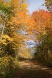 秋天土气的土路 库存图片
