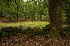 秋天在'末多da Albergaria'Geres,国立公园 免版税库存照片