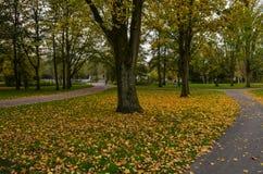 秋天在一个公园在阿姆斯特丹 免版税库存图片
