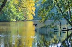 秋天在一个公园在阿姆斯特丹 库存照片