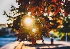 秋天在一个分支的秋叶与阳光 库存照片