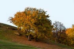 秋天在一个多小山风景的乡下风景以橡木为目的 库存照片