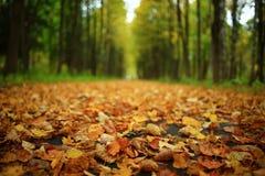 秋天在一个金黄森林里 图库摄影