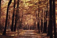 秋天在一个金黄森林里 库存图片