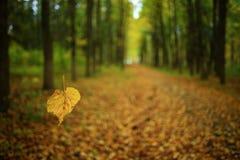 秋天在一个金黄森林里 免版税库存照片