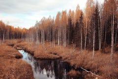 秋天在一个金黄森林里 库存照片