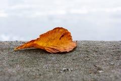 秋天在一面护墙上上色了栗子叶子下落 图库摄影
