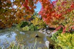 秋天在世田谷区公园 库存照片