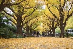 秋天在东京与银杏树在地面上的树秋天黄色叶子  免版税库存照片