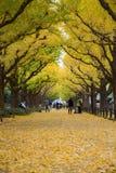 秋天在东京与银杏树在地面上的树秋天黄色叶子  免版税库存图片