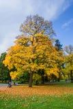 秋天在中央温泉公园-小西部漂泊温泉渡假胜地Marianske Lazne Marienbad -捷克 免版税库存照片